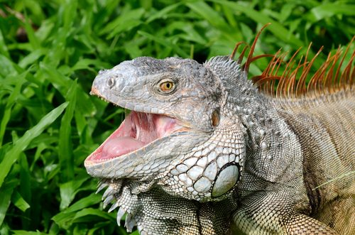 As a general rule, you want to avoid anything that generates comparisons between you and a lizard.