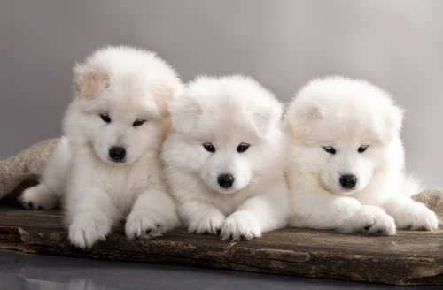 As opposed to these puppies who really just want you to bury your face in their fur until you die from cute.