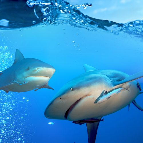 Well, if you're going to chum the water, you have nobody to blame when the sharks show up...
