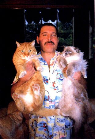 Singer of one of the greatest rock bands of all time. Still found time to call his cats while on the road.