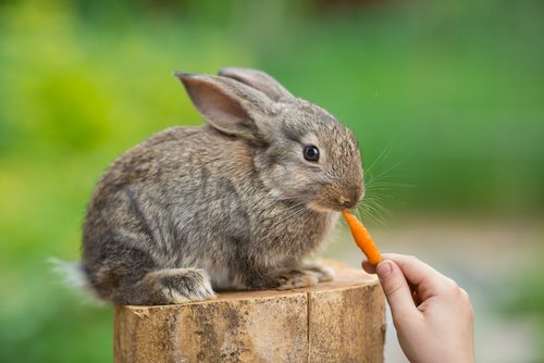And now here's an adorable bunny to wash that image out of your brain.