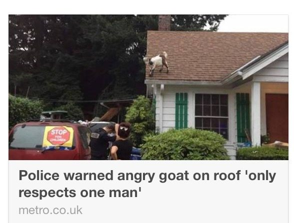 """Tell the cops to baaaaa-ck off man."""