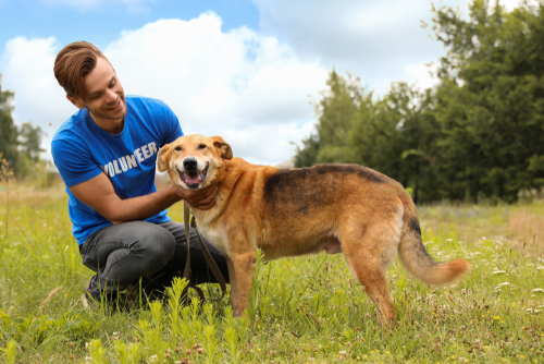 A man volunteering with a pet shelter, playing with a happy dog