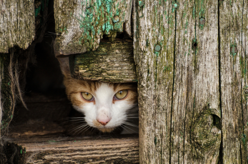 Feral cats living in an abandoned farmhouse